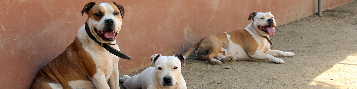 dog-banner - euro dog